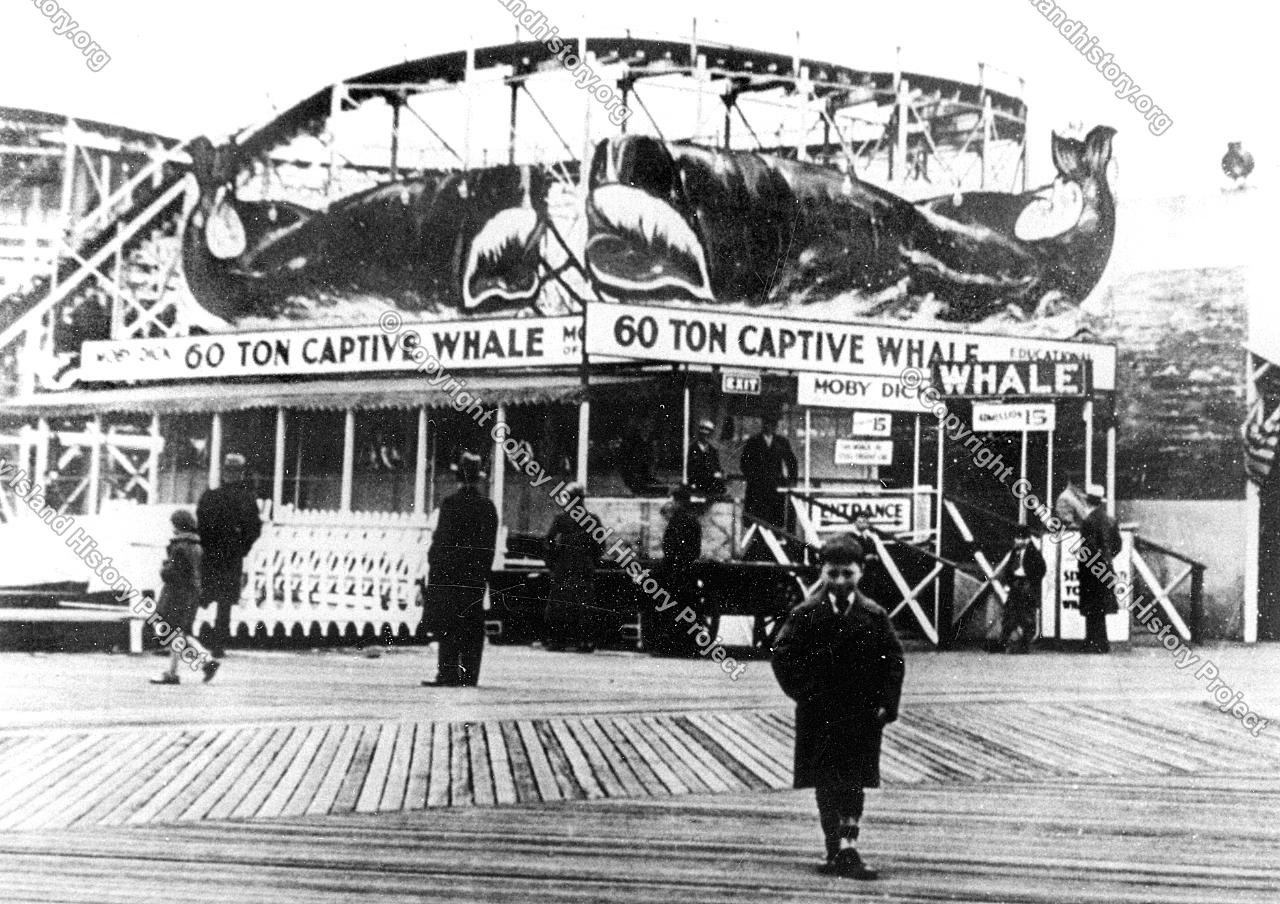 whale exhibit coney island history project